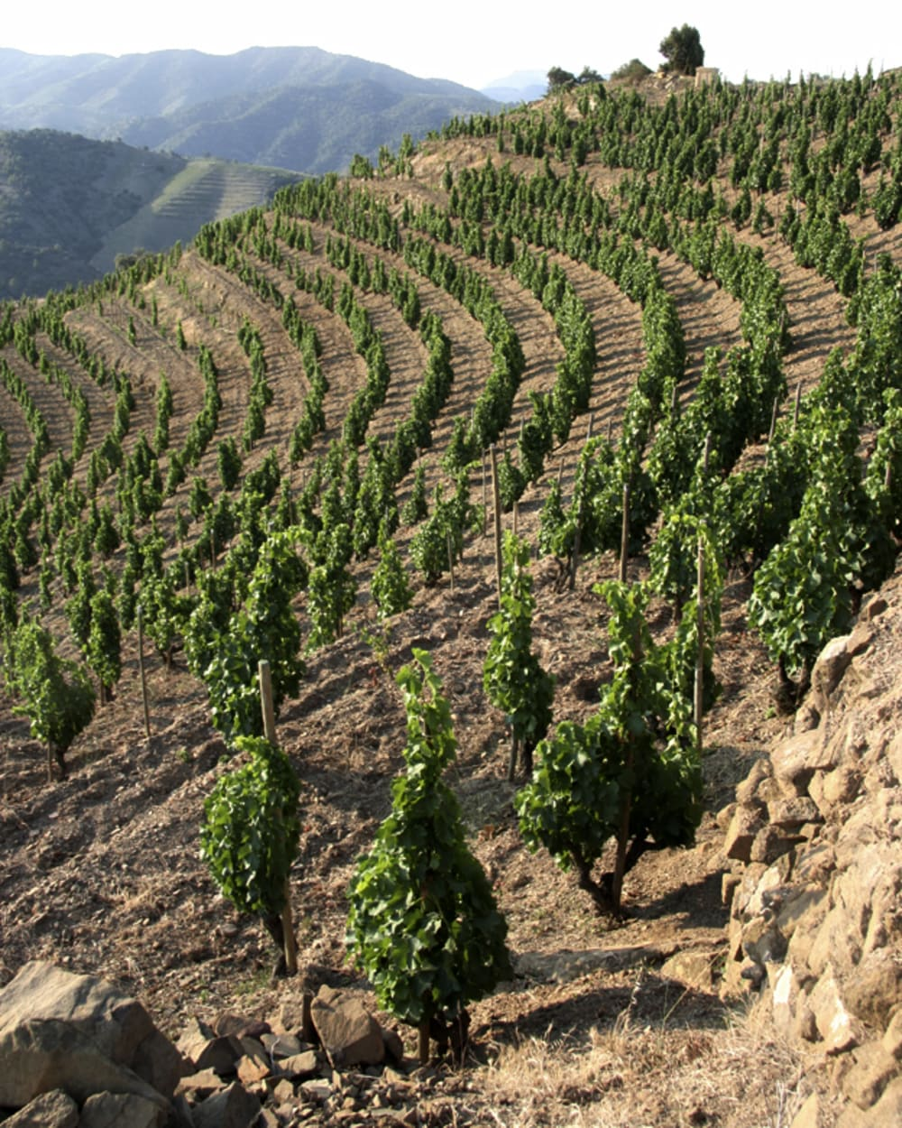 Priorat (courtesy Alavaro Palacios)