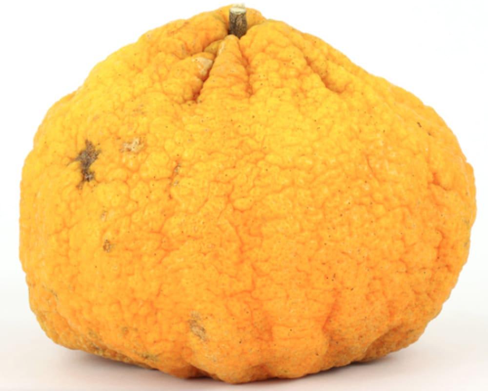 Ugly fruit and veg