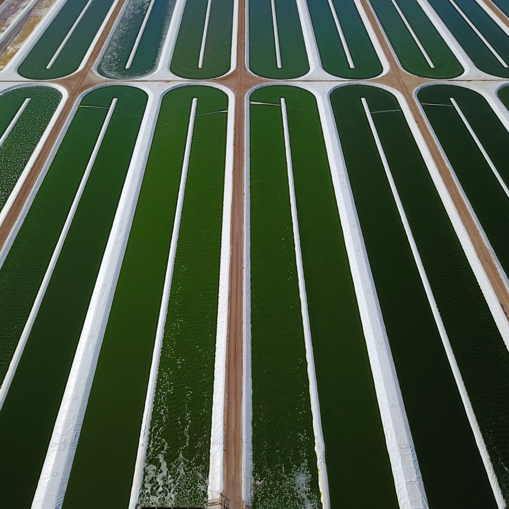 Seagrass Tech