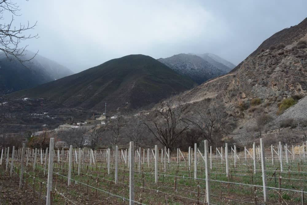 Yunna vineyards