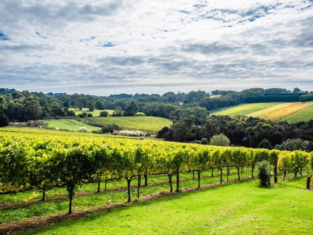 Mornington Peninsula vineyards