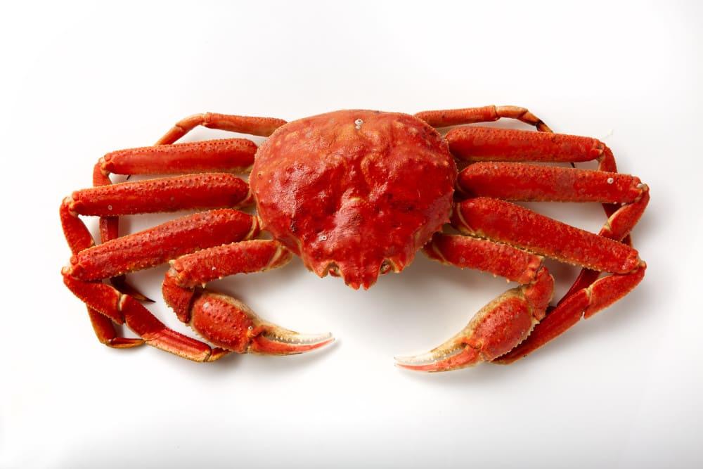 Alaska snow crab