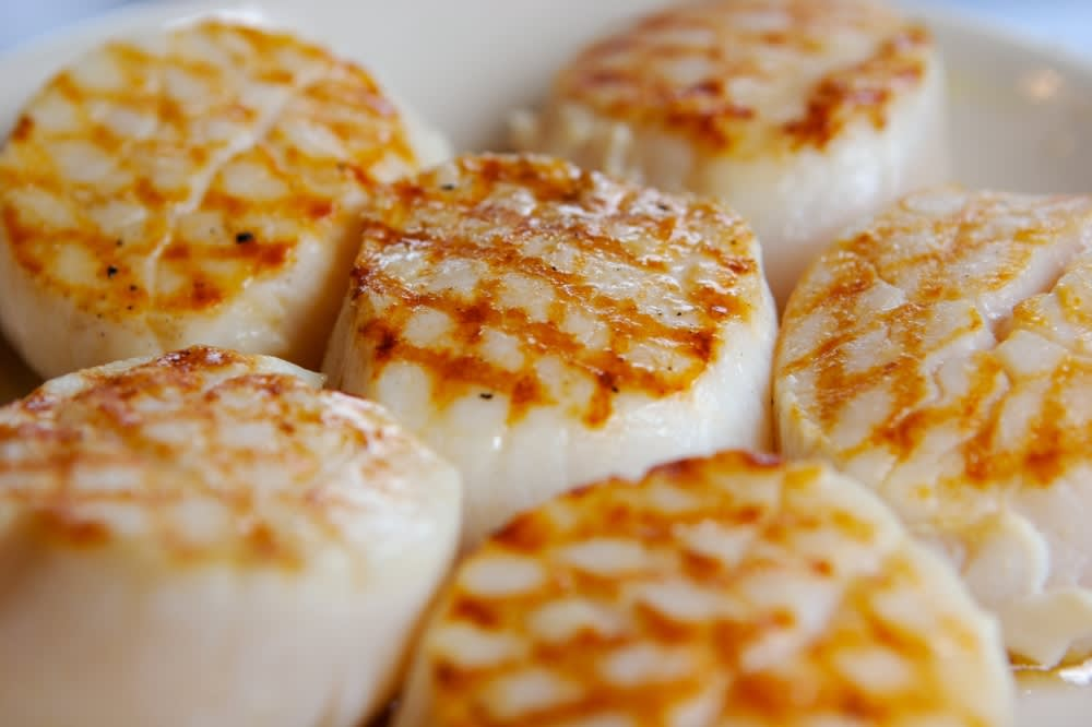 US Atlantic sea scallops
