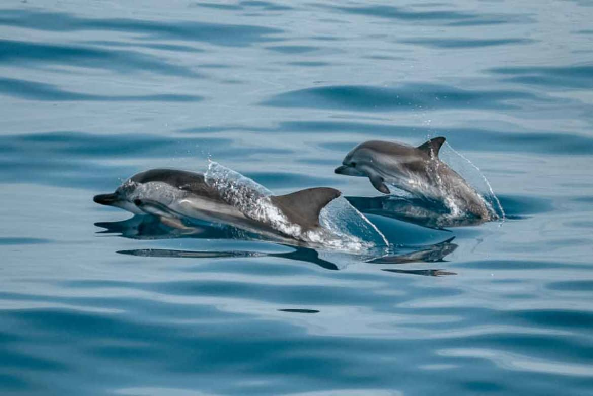 Animal Assisted Therapy With Dolphins