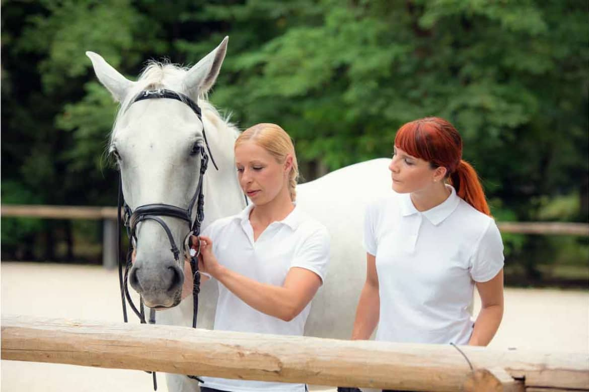 How animal assisted therapy works