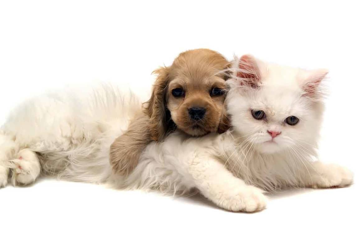 What Kinds of Animals Can be Therapy Animals