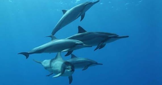 12 Facts You Don't Know About Hawaii's Dolphins