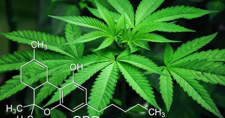 The Role of Medical Marijuana in Addiction Treatment