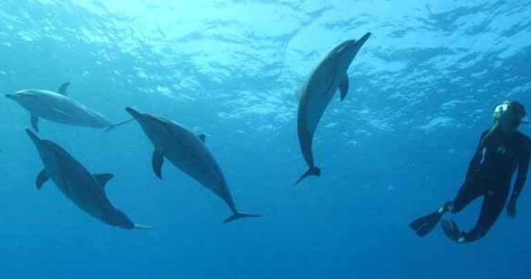 The benefits of Dolphin Assisted Therapy