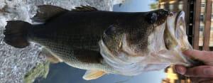 Bass Fishing in Bay Area