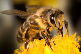 Neonicotinoids may alter estrogen production in humans