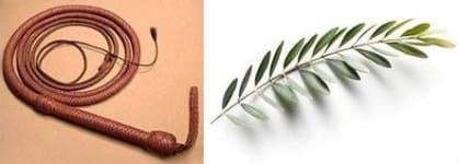whip olivebranch