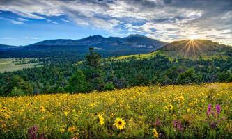 grassland and flowers