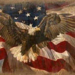 eagle american flag iamge