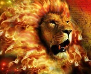 fire lion image