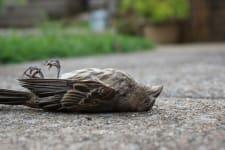 dead bird image