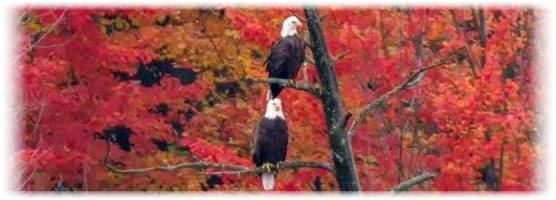 Eagles photo bu BKG Photography