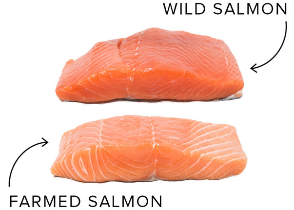 How To Buy Prep And Cook Salmon