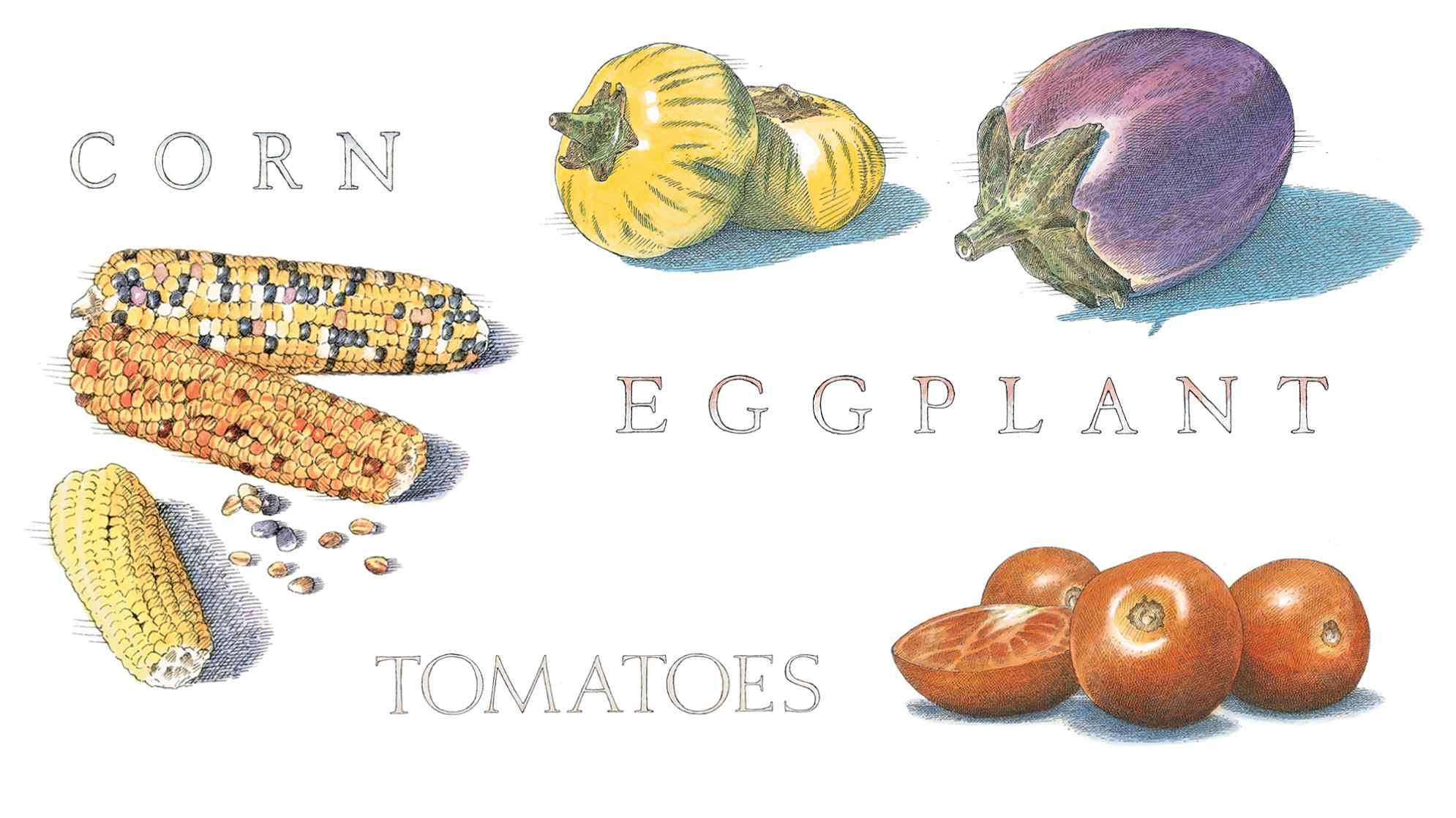 What to Cook in July: Corn, Tomatoes, and Eggplant
