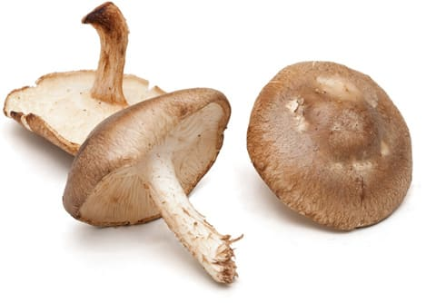 Mushrooms 101: Everything You Need to Know