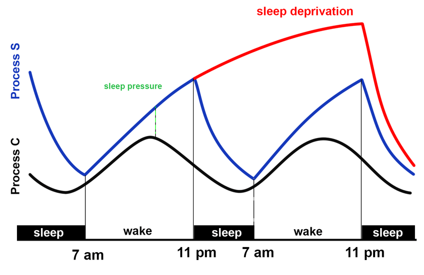 sleep-deprivation-graph.png
