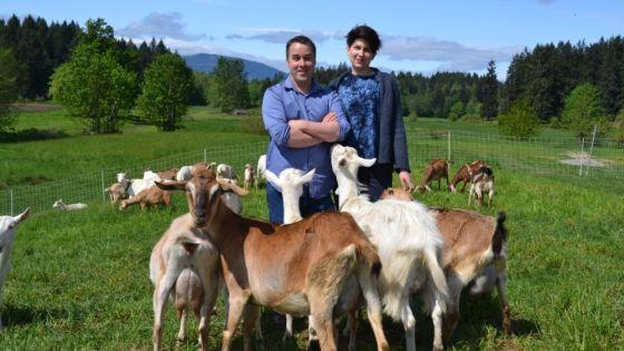 Vancouver Island farmer milks tech skills to combat dairy industry scourge
