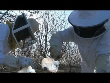 Startup comes up with formula to revive declining bee population