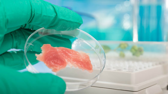The price of alternative protein: Tech developments and funding boom propelling the sector