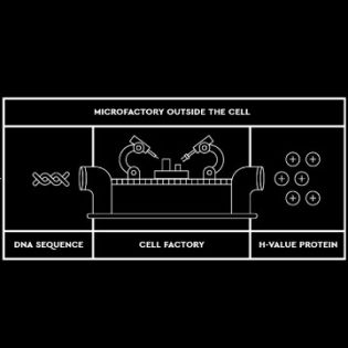 Designing Proteins Bit by Bit