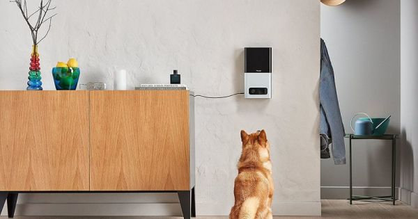 Petcube Bites camera lets you take care of your pet remotely — and it's $44 off on Amazon