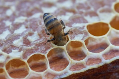 Startups Swarm To Build Bee-Based Businesses