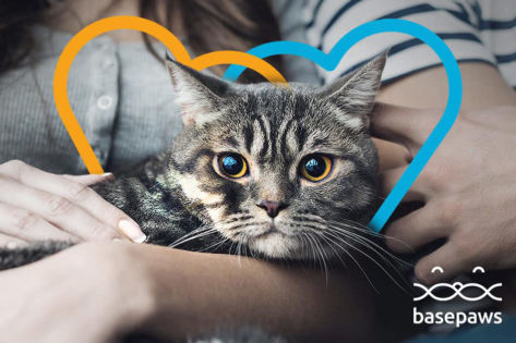 Basepaws, Dig fetch funding at Purina's first Pet Care Innovation Summit