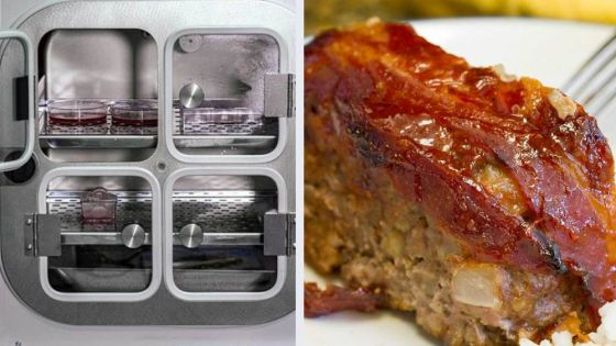 Russian Scientists Just Made the First Lab-Grown Meatloaf