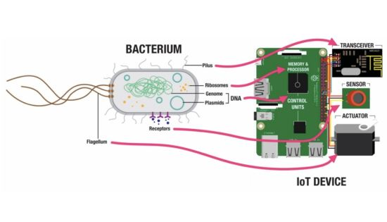 Your Future Raspberry Pi Could Be Made From Bacteria