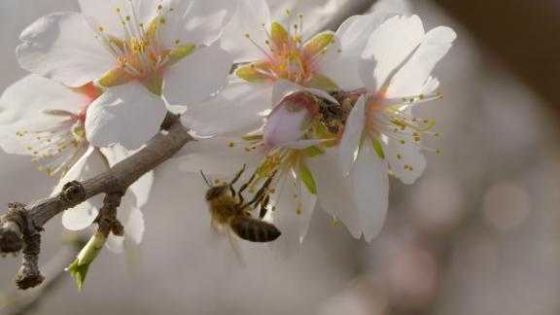 Why this startup is making honeybees smarter