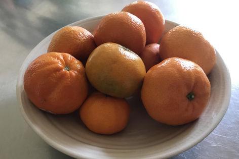 Food-X Accelerator Backs Fruit & Veggie Upcycler Nature Preserve To Fight Food Waste