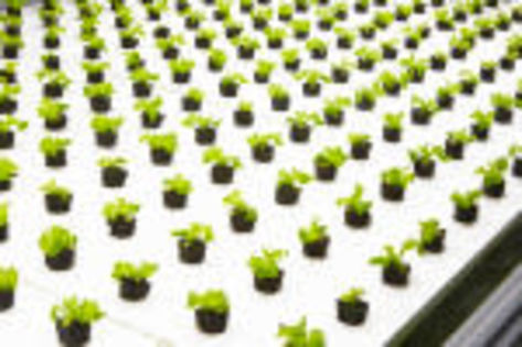Nordetect's system to monitor soil and water for indoor agriculture raises seed funding