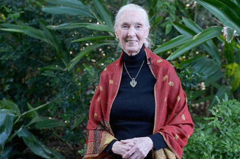 Jane Goodall to Narrate New Documentary About Cell-Based Meat | The Beet