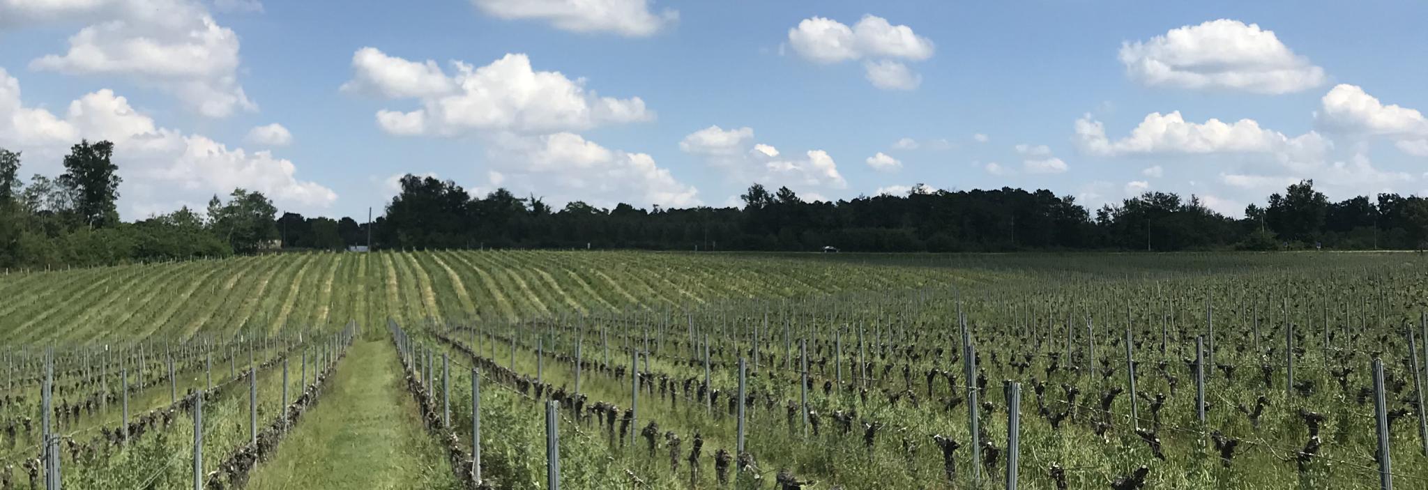 vignes vallée