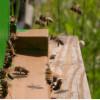 image_thumb_Environnement/Biodiversité - Installation d'un rucher pédagogique connecté
