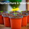 image_thumb_DES SERRES POUR DES PLANTS BIO