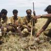 image_thumb_La bio-agriculture chez des chasseurs professionnels de serpents en Inde...