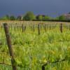 image_thumb_Financer une éolienne contre le gel de printemps