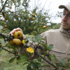 image_thumb_DES FRUITS AU JARDIN