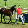 image_thumb_Tricky (yearling de plat précoce)