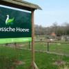image_thumb_Vliegwiel op de Bossche Hoeve