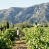 image_thumb_Achat de Foudres Alsaciens pour elevage et vinification de vins blancs