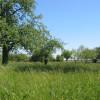 image_thumb_Plantation d'un verger pour la biodiversité