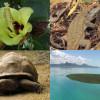 image_thumb_Conservation de la biodiversité endémique de l'île Maurice