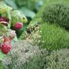 image_thumb_Développer mon herberie bio (plantes aromatiques, médicinales et fruits rouges)